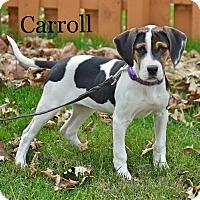 Adopt A Pet :: Carroll - Pleasant Plain, OH