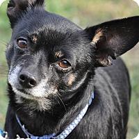 Adopt A Pet :: Sparky - Lodi, CA