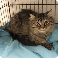 Adopt A Pet :: Talia - Naperville, IL