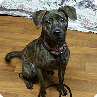 Adopt A Pet :: Roslyn - Lisbon, OH
