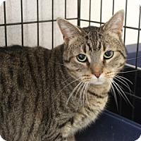 Adopt A Pet :: Leo - Naperville, IL