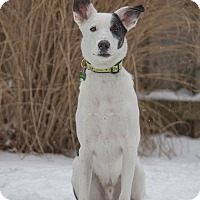 Adopt A Pet :: Jester - Drumbo, ON