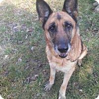 Adopt A Pet :: Maya - Louisville, KY