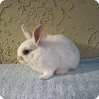 Adopt A Pet :: Mimi - Bonita, CA