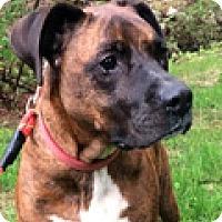 Adopt A Pet :: Sophie Girl - Durham, NC