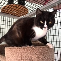 Adopt A Pet :: Monica - Diamond Springs, CA