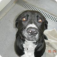 Adopt A Pet :: DAISY - Sandusky, OH