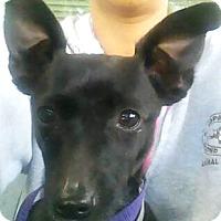 Adopt A Pet :: Yo-Yo - Oakland, CA
