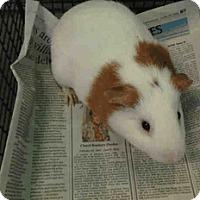 Adopt A Pet :: *Urgent* Kip - Fullerton, CA