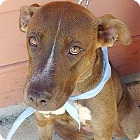 Adopt A Pet :: Mandy - Huntsville, AL