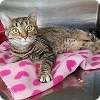 Adopt A Pet :: Torbie - Elyria, OH