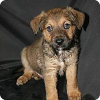 Adopt A Pet :: Aggie - Denver, CO