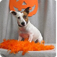 Adopt A Pet :: Ace - Waldorf, MD