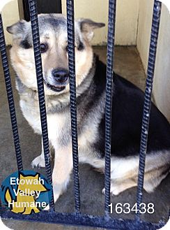 German Shepherd Dog/Husky Mix Dog for adoption in Boston, Massachusetts - Freddie