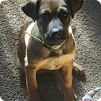 Adopt A Pet :: Dolly - Wilkes Barre, PA