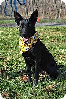 German Shepherd Dog Mix Dog for adoption in Mt. Airy, Maryland - Queenie