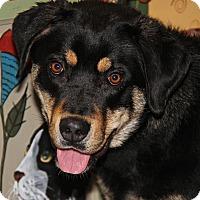 Adopt A Pet :: Benji - Marietta, OH