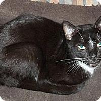 Adopt A Pet :: Ernie - Acme, PA