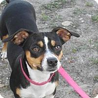 Adopt A Pet :: Daisy Mae - Lockhart, TX
