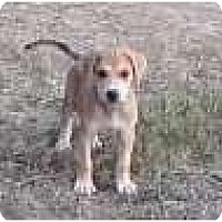 Adopt A Pet :: Austin - Allentown, PA