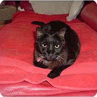 Adopt A Pet :: Billy - Scottsdale, AZ