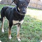 Adopt A Pet :: Gemini 3980