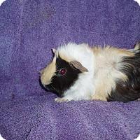 Adopt A Pet :: Flora Ramirez and Maria - Fullerton, CA