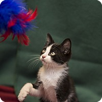 Adopt A Pet :: Zo - Fountain Hills, AZ