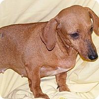 Adopt A Pet :: Faith - Floresville, TX