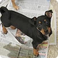 Adopt A Pet :: Milo2 - Fresno, CA