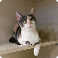 Adopt A Pet :: Tiffany - Berkeley Hts, NJ