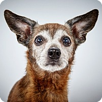 Adopt A Pet :: Fred Astaire - New York, NY