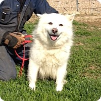 Adopt A Pet :: Frosty - Medora, IN