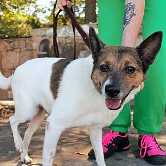 Jack Russell Terrier Mix Dog for adoption in Atlanta, Georgia - Princess