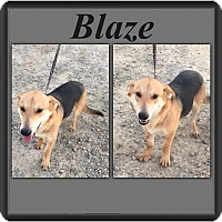 Adopt A Pet :: Blaze IN CT - East Hartford, CT