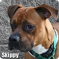 Adopt A Pet :: Skippy - Encino, CA