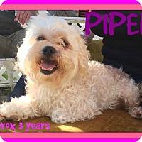 Adopt A Pet :: PIPER - Devine, TX