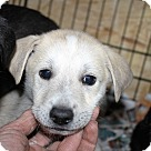 Adopt A Pet :: Army-Navy-Airforce_Marines