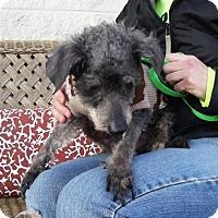 Adopt A Pet :: Carlito - Dublin, VA