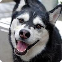Adopt A Pet :: CHARLOTTE - Seattle, WA