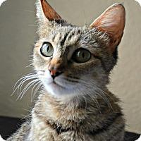 Adopt A Pet :: Bindi - Mission Viejo, CA