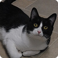 Adopt A Pet :: Sully - Winchendon, MA