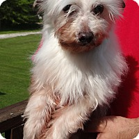 Adopt A Pet :: SAMMY - Wheeling, WV