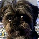 Adopt A Pet :: VIRGINIA in Linden, VA.