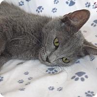 Adopt A Pet :: MICAH - Mesa, AZ