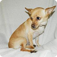 Adopt A Pet :: Lolita - Umatilla, FL