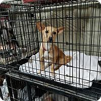 Adopt A Pet :: WONTON - Lubbock, TX