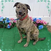 Adopt A Pet :: RIVER - Marietta, GA