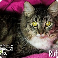 Adopt A Pet :: Ruffles - Akron, OH