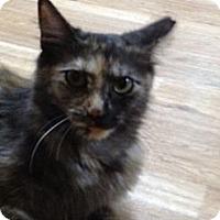 Adopt A Pet :: Clairabell - Monroe, GA